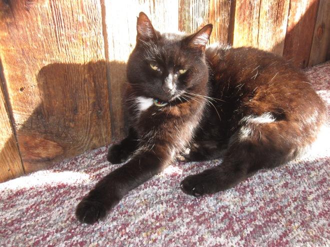 Author Ashley Crookham's cat